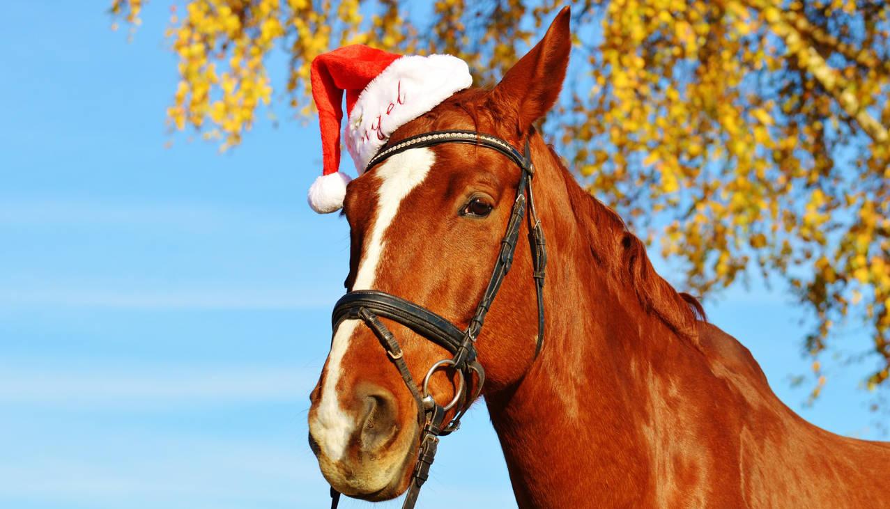 Pendant les vacances de Noël, montez à cheval !