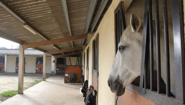 Chevaux en pension aux boxes